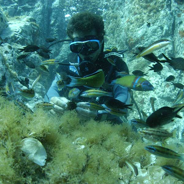 Discover Scuba Diver Sub Dive X
